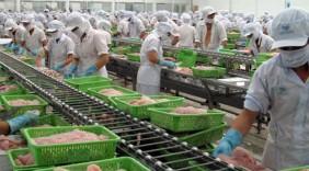 Xuất khẩu cá tra sang Anh sẽ tăng trưởng mạnh