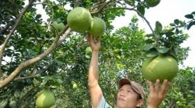 '4 nhà' xây thương hiệu trái cây Việt