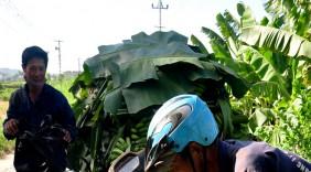 Việt Nam có thể giành ngôi đầu của Philippines về xuất khẩu chuối