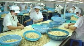 Việt Nam 10 năm liên tiếp đứng đầu thế giới về xuất khẩu nhân điều