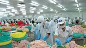 Cá tra Việt Nam tiếp tục được xuất khẩu vào Panama