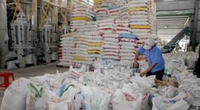 Xuất khẩu gạo cao cấp: Hướng đi mới cho ngành lúa gạo Việt