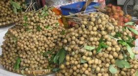 Mỹ, Hàn Quốc chuộng trái cây Việt
