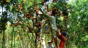 Làm gì để bảo vệ nông sản Việt trước biến động thị trường quốc tế?