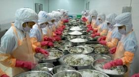 Kim ngạch xuất khẩu tôm Việt Nam sang Mỹ đạt hơn 176 triệu USD