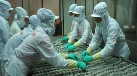 Nhiều nhà hàng Mỹ đang tăng cường tích trữ tôm Việt Nam