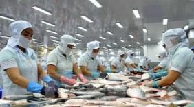 Dù bị chơi xấu, cá tra Việt Nam vẫn