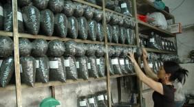 Nông sản Việt chinh phục thị trường nội địa
