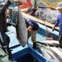 Cá ngừ Việt Nam xuất khẩu sang 79 nước