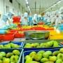 Xuất khẩu rau quả cán mốc 1 tỷ USD