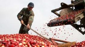 Thúc đẩy xuất khẩu hàng nông sản Việt Nam sang Nga