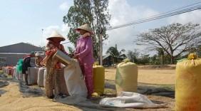 Mở đường cho nông sản Việt vào thị trường Trung Đông