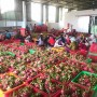 Doanh nghiệp Việt tìm kiếm nhà nhập khẩu rau quả tại thị trường Châu Âu