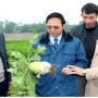 Rau an toàn Việt Long - Ngát xanh cánh đồng nông thôn mới