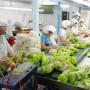 Xuất khẩu hàng nông nghiệp: Chớp thời cơ
