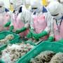 Xuất khẩu tôm chân trắng sang các thị trường lớn nhiều triển vọng