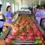 Rau quả Việt Nam ngày càng được ưa chuộng tại thị trường Nhật Bản