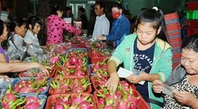 Cẩm nang xuất khẩu thanh long vào thị trường Trung Quốc