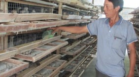 Làm giàu từ nuôi chim bằng nắm tay