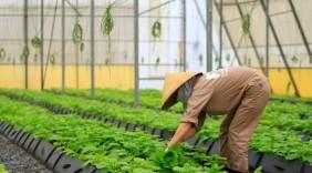 Rau hữu cơ PVF của TH ra mắt ấn tượng tại chợ nông sản lớn nhất thế giới