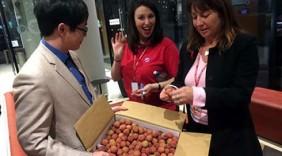 Vải thiều tươi sang Tây Úc, 240.000 đồng/kg người Việt vẫn thích mê