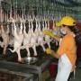 Thêm cơ hội xuất khẩu thịt gà chế biến sang Nhật Bản