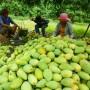 Giao lưu kết nối sản xuất, thu mua nông sản