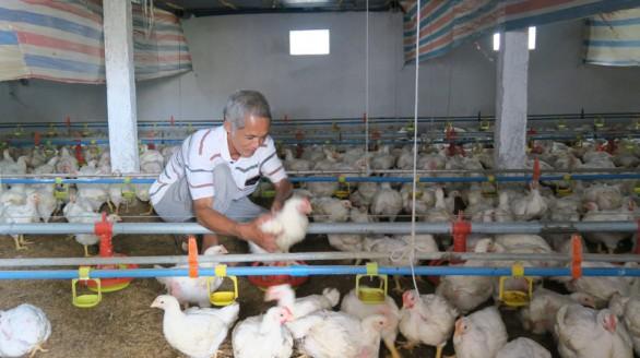 Khởi nghiệp từ 3.000 con gà