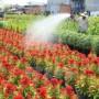 Đồng Tháp giúp nông dân liên kết và tiêu thụ sản phẩm