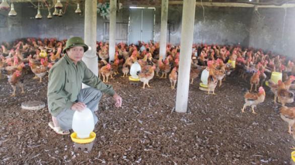 Thu nhập gần 5 tỷ mỗi năm từ trang trại