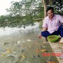Làm giàu thành công từ nuôi cá nhiều tầng