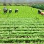 Sản xuất nông nghiệp phải gắn với tiêu thụ nông sản