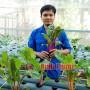 Kỹ sư trẻ khởi nghiệp với nghề trồng rau thủy canh