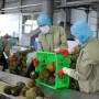 Người tiêu dùng EU tin hàng Việt hơn... doanh nghiệp Việt