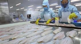Cơ hội lớn cho cá tra Việt Nam với CPTPP