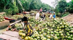 Hàng Việt lên sàn thương mại điện tử Lazada và Amazon: Cơ hội rộng mở