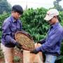 Nâng tầm thương hiệu cà phê Việt