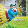 Gạo Việt: Định vị trên bản đồ nông sản
