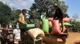 Cà phê Việt: Tìm hướng đi bền vững