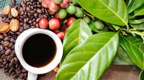Xuất khẩu cà phê tháng 7 đạt mức giá cao nhất sau 8 tháng