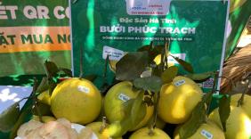 Mùa thu hoạch nông sản tháng 8: Đặc sản Na Chi Lăng, Bưởi Phúc Trạch đến với đông đảo người tiêu dùng cả nước qua thương mại điện tử
