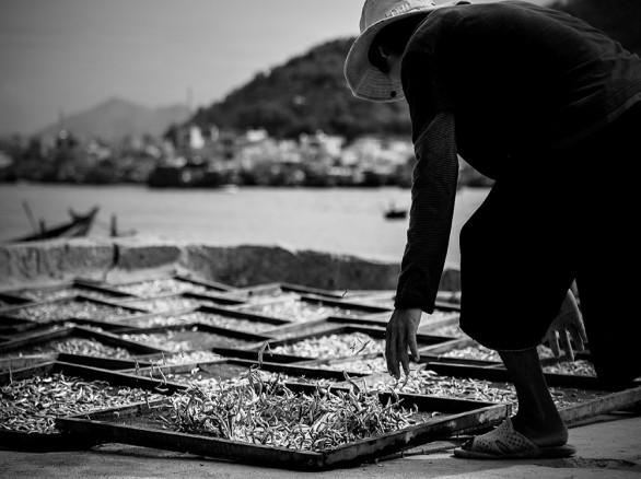 Phơi cá ở cảng Hòn Rớ, Nha Trang, Khánh Hòa.
