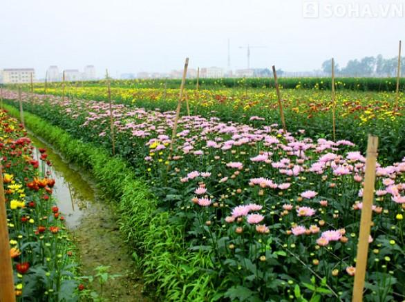 Làng hoa Nhật Tân