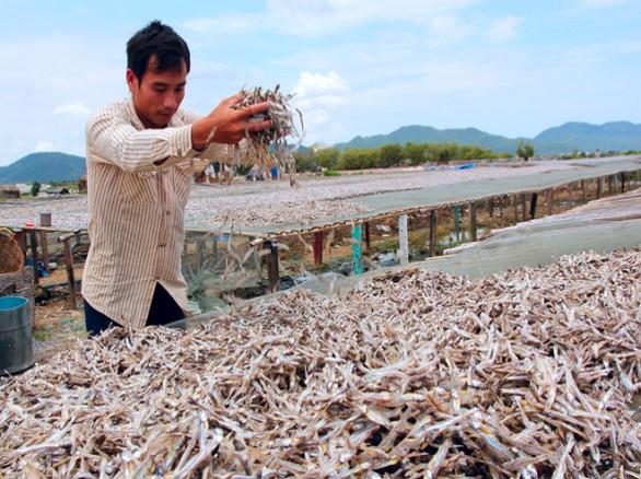 Làng làm cá khô ở Vũng Tàu