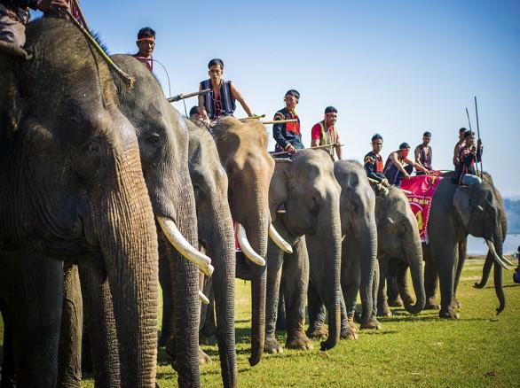 Lễ hội đua voi độc đáo ở Tây Nguyên