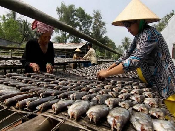 Nghề làm cá khô bổi ở Cà Mau