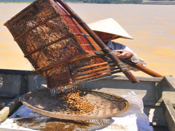 Cào don trên sông Trà Khúc