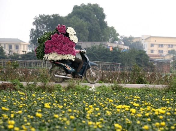 Làng hoa Tây Tựu