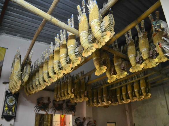 Độc đáo nghề làm tôm tre ở Bình Định