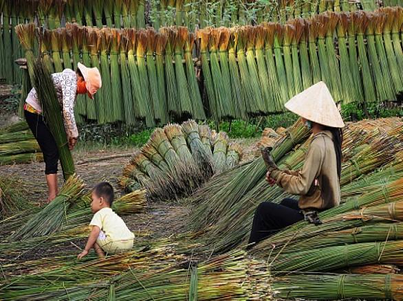 Làng nghề đan bàng Phú Mỹ